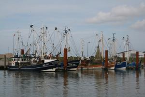Fischkutter, Hafen, Ebbe und Flut
